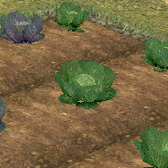 Cabbage (Homestead) on Homestead.png