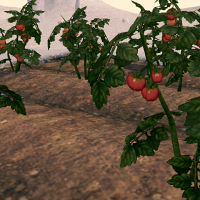 Tomato (Homestead) on Homestead.png