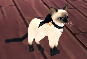 Lovely Siamese 2.png