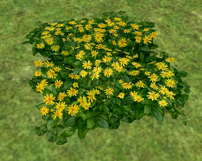 Homestead_Wild_Chrysanthemums_on_Homestead.png