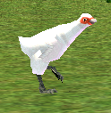 Hen (Homestead) on Homestead.png