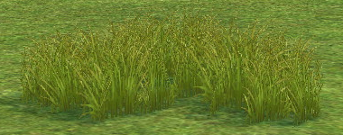 Prairie Grass on Homestead.png