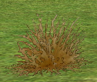 Desert Grass on Homestead.png